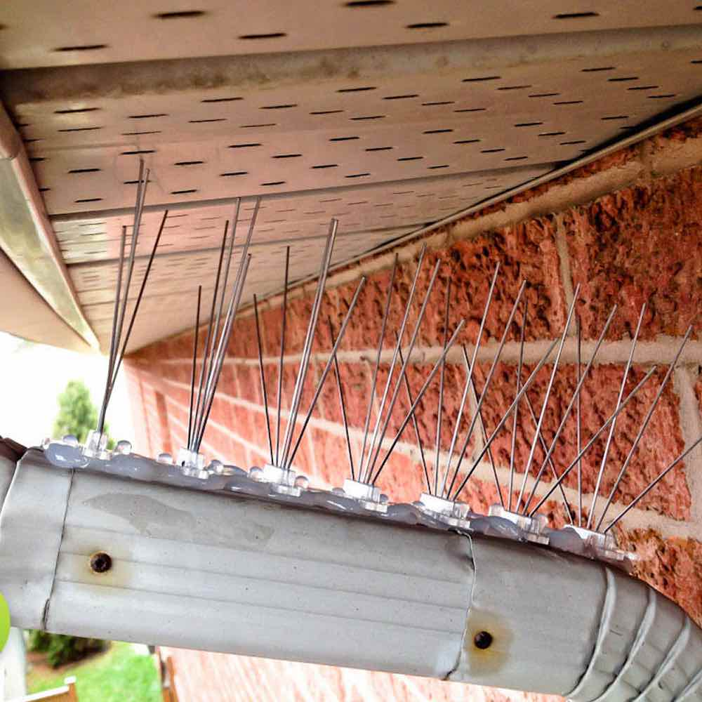 buy bird spikes for house gutters