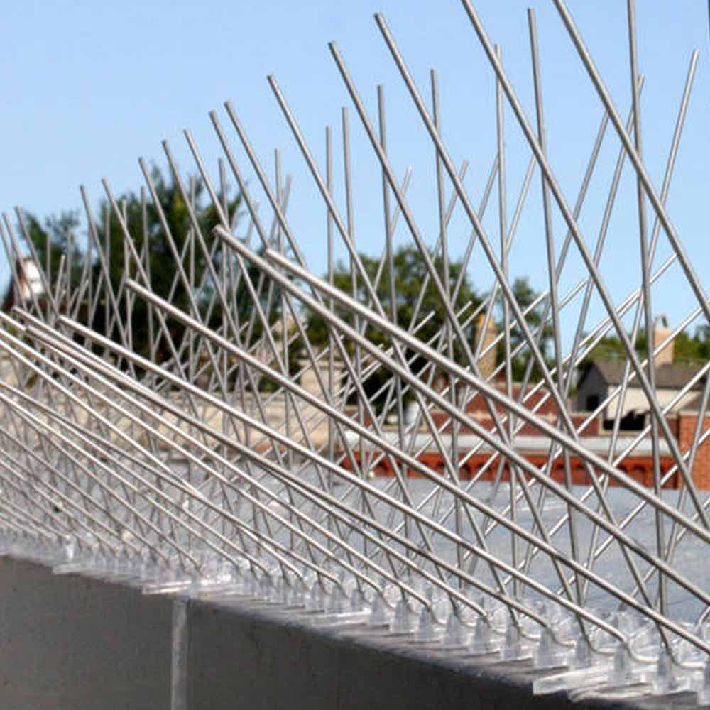 buy bird spikes for roof top